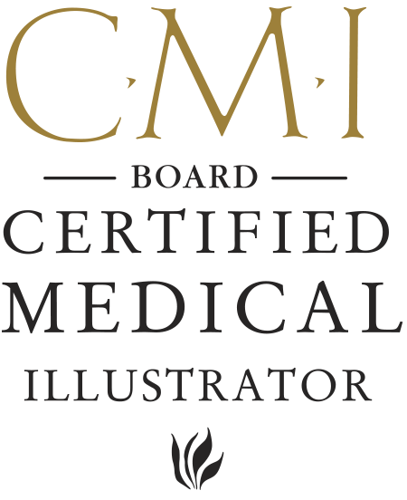 Board Certified Medical Illustrator